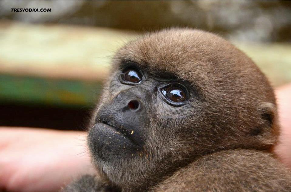 monkey.001